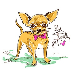 Little cute chihuahua dog vector image