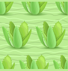 succulents seamless pattern vector image