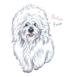 white cute dog bichon frise breed vector image