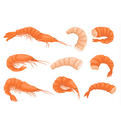 flat set of whole and peeled shrimps vector image
