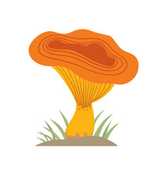 poisonous orange mushroom nature food vegetarian vector image