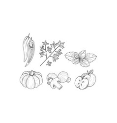 set of vegetables fruits and herbs in vector image