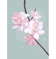Blossom poster vector