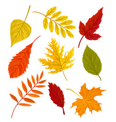 Collection of beautiful colourful autumn leaves vector