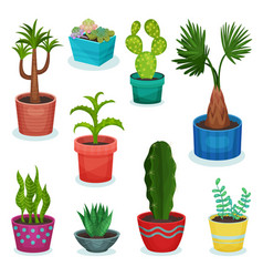 evergreen house plants in flower pot set element vector image