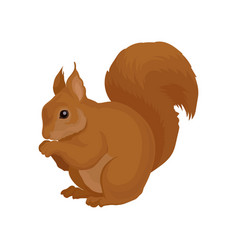 flat icon of brown squirrel forest rodent vector image