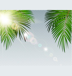 summer time palm leaf with sunbeam on transparent vector image