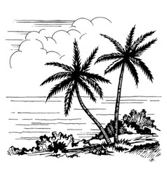 palms and the sea sketch vector image vector image