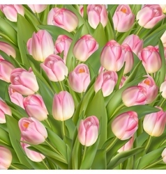 Beautiful realistic tulip background EPS 10 vector image vector image