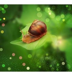 snail3 vs vector image vector image