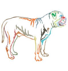 colorful decorative standing portrait of boerboel vector image