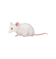 flat icon of laboratory rat rodent with vector image