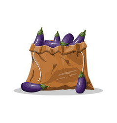 fresh eggplant with green leaves in canvas bag vector image