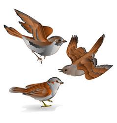 Little birds cub sparrow passer domesticus vector