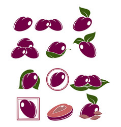 set of plums vector image