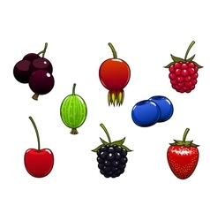Sweet ripe juicy isolated berries vector