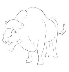 black linebison on white background hand drawing vector image