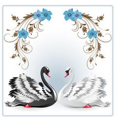 elegant white and black swan vector image