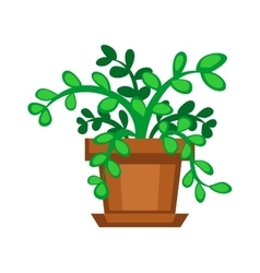 Home plant in pot vector image