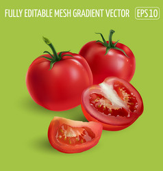 Whole and sliced red tomatoes on a green vector