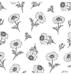 Chamomile seamless background camomile pattern vector