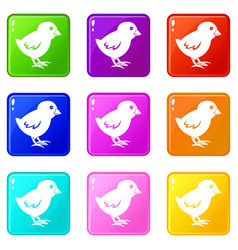 Chick icons 9 set vector