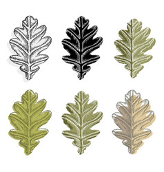 Collection of oak leaves isolated on white vector