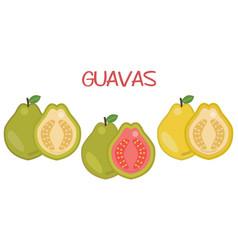 Guava fruits icon set green vector