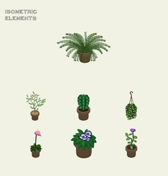 Isometric flower set of fern flowerpot blossom vector