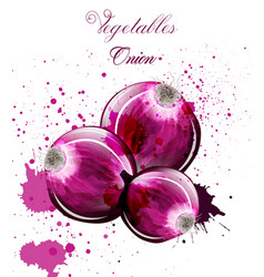 onion watercolor delicious colorful vector image
