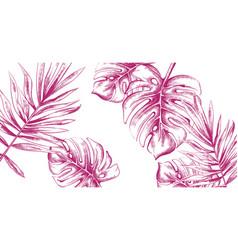 palm leaves tropic fsummer background line art vector image
