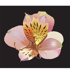 Pink Floral Flower vector