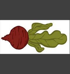 Ripe beetroot with leaf healthy vegetable vector