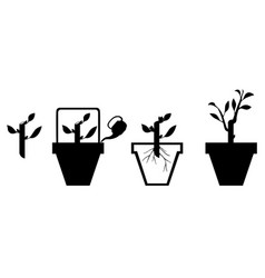 scheme rooting cuttings vector image