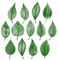 Set green leaves isolated vector