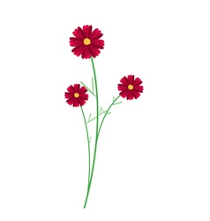 Three Red Cosmos Flowers on White Background vector
