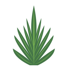 Tropical leaves nature foliage flora botany icon vector