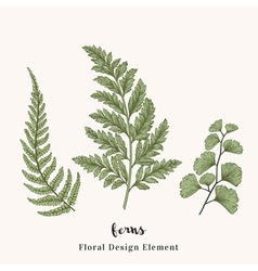 Set with ferns Plants with leaves isolated vector image vector image