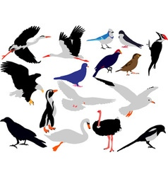 birds vs vector image