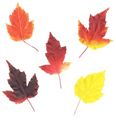 Color Leaves vector