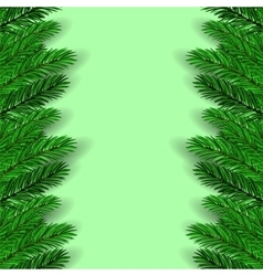 Green Fir Branches vector image