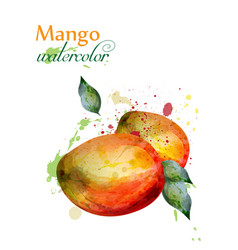 mango fruit watercolor delicious colorful vector image