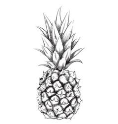 Pineapple line art vintage design fruit isolated vector