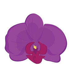 Purple orchid flower vector image vector image