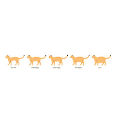set cat body condition flat vector image