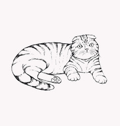 fold cat - hand drawn flap vector image