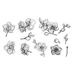 Hand drawn set with orchid flowers vector