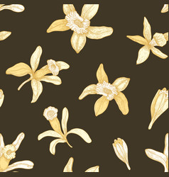 natural seamless pattern with blooming vanilla vector image