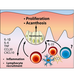 Pathogenesis of acanthosis nigricans vector