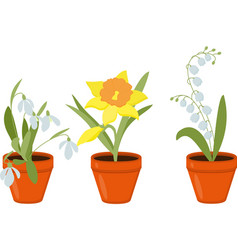 spring flowers growing in the pods vector image